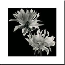 Dahlia art print poster with block mounting