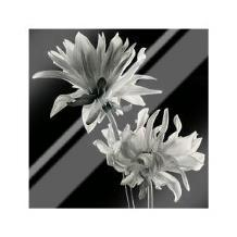 Dahlia art print poster with laminate