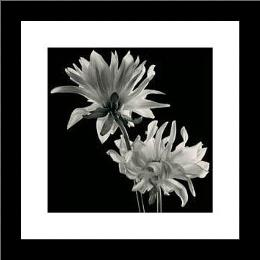 Dahlia art print poster with simple frame