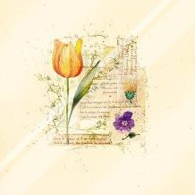 Flower Notes With Orange Tulip art print poster with laminate