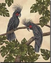 Black Palm Cockatoos art print poster with block mounting