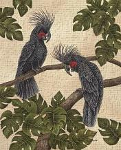 Black Palm Cockatoos art print poster transferred to canvas
