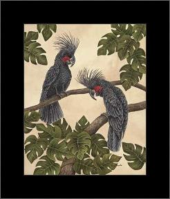 Black Palm Cockatoos art print poster with simple frame