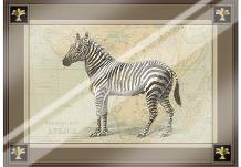 Zebra with Border I art print poster with laminate