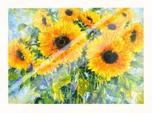 Sunflowers art print poster with laminate