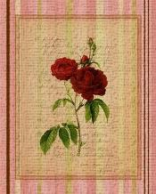 Botanical Rose III art print poster transferred to canvas