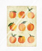 Peach Collage art print poster with laminate