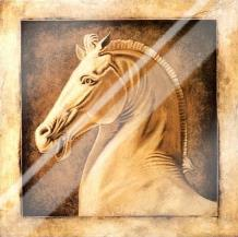 Equus art print poster with laminate