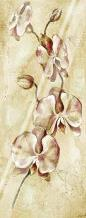 Tropical Orchid II art print poster with laminate