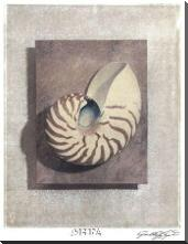 Seashell Study II art print poster with block mounting