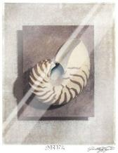 Seashell Study II art print poster with laminate