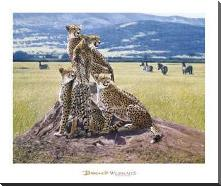Cheetah Watch art print poster with block mounting