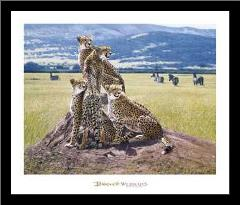 Cheetah Watch art print poster with simple frame