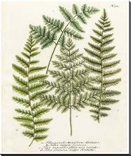 Fern Gathering I art print poster with block mounting