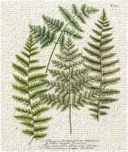 Fern Gathering I art print poster transferred to canvas