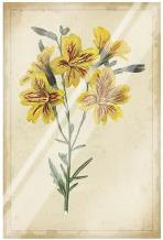 Curtis Blooms In Yellow IV art print poster with laminate