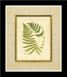 Fern With Crackle Mat (H) III art print poster with simple frame