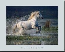 Aquatic Gallop art print poster with block mounting