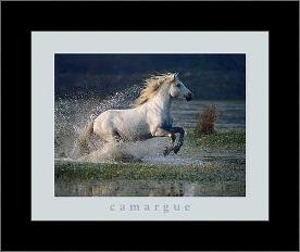Aquatic Gallop art print poster with simple frame