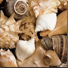 Beachside Shells art print poster with block mounting