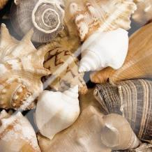Beachside Shells art print poster with laminate