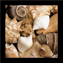 Beachside Shells art print poster with simple frame