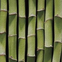 Bamboo Lengths art print poster transferred to canvas