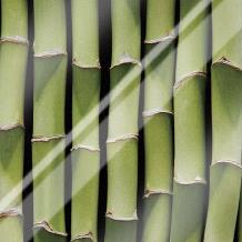 Bamboo Lengths art print poster with laminate