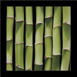 Bamboo Lengths art print poster with simple frame