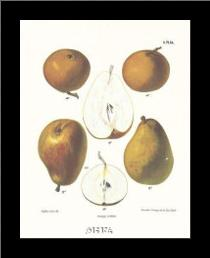 Pears art print poster with simple frame