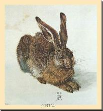 Young Hare art print poster with block mounting