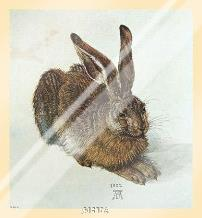 Young Hare art print poster with laminate