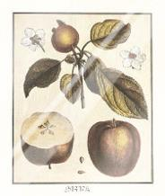 French Fruit Plateapple art print poster with laminate