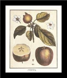French Fruit Plateapple art print poster with simple frame