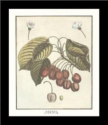 French Fruit Platecherries art print poster with simple frame