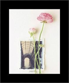 Peony, Euro-Floral art print poster with simple frame