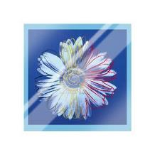 Daisy, C1982 (Blue On Blue) art print poster with laminate