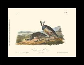 California Partridge art print poster with simple frame