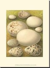Bird Egg Collection III art print poster with block mounting