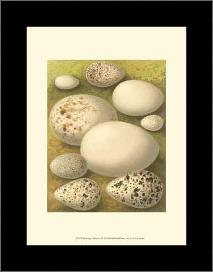 Bird Egg Collection III art print poster with simple frame
