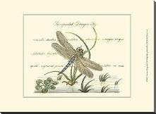 Antique Dragonfly II art print poster with block mounting
