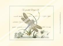 Antique Dragonfly II art print poster with laminate