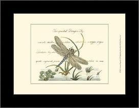 Antique Dragonfly II art print poster with simple frame