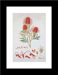 Red Silky Oak art print poster with simple frame