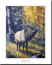 Bull Elk art print poster with block mounting