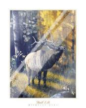 Bull Elk art print poster with laminate
