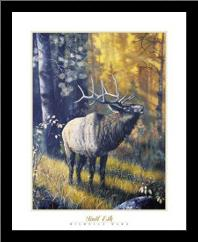 Bull Elk art print poster with simple frame