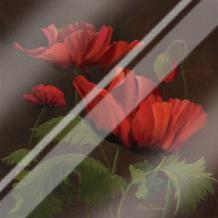 Vibrant Red Poppies II art print poster with laminate