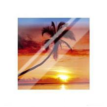 Sunset - Palm Tree art print poster with laminate