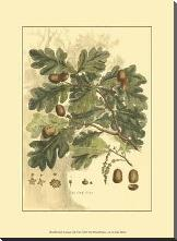 Small Antique Oak Tree art print poster with block mounting